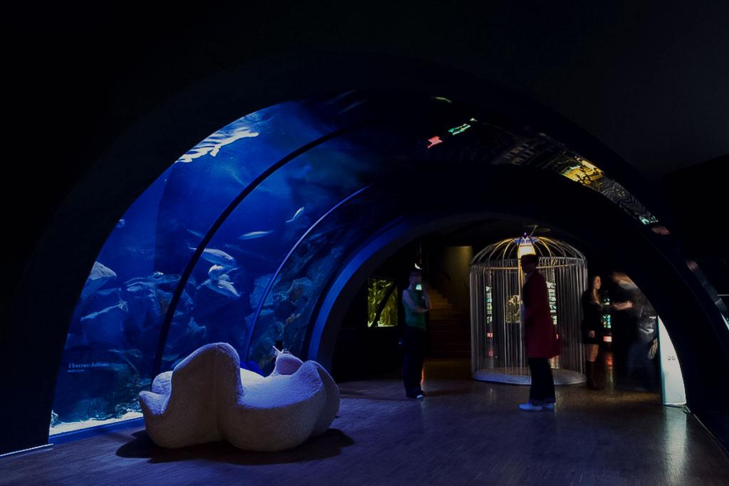 Una notte all'Acquario, Milano